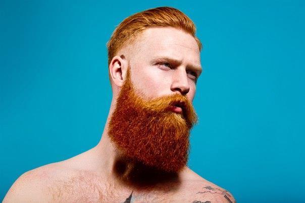 Рыжебородый бородач